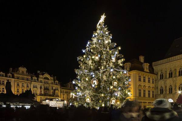 vánoční strom republiky - Staromák